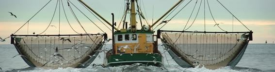 Friend Of The Sea Service - Fishing vessel