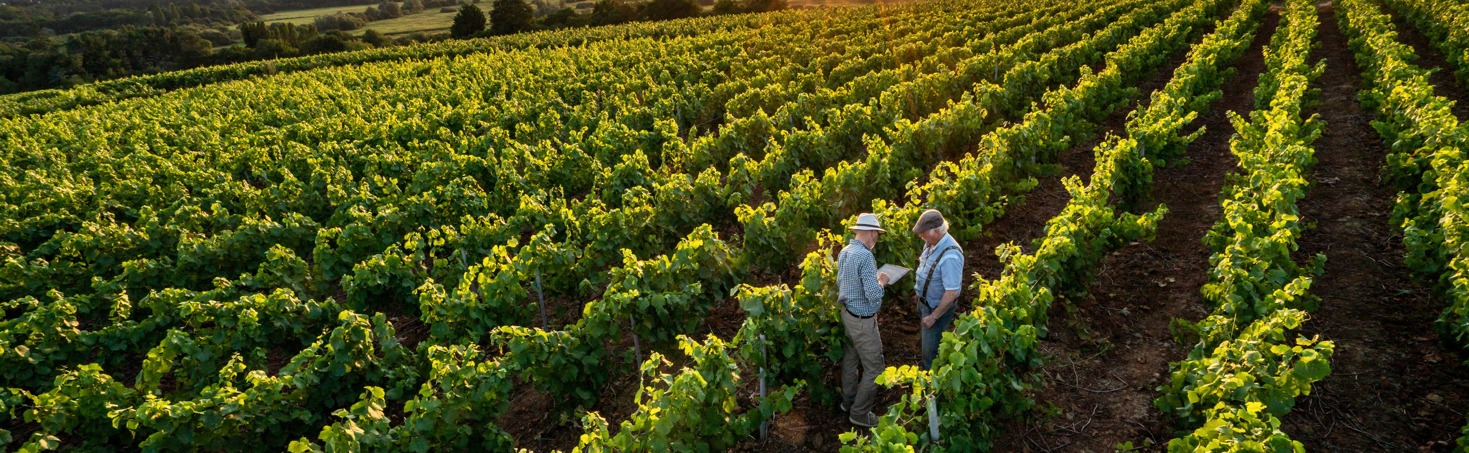 Digital technology used in winelands